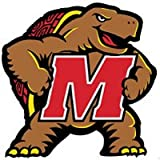 NCAA Maryland Terrapins - Large Wall Accent College Mural / Sticker