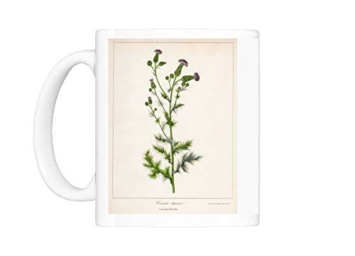 (Mug of Canada thistle botanical engraving 1843 (13610869))