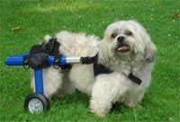 Dog Wheelchair – XSmall – Made By Walkin' Wheels, My Pet Supplies