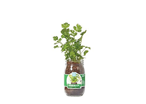 Back to the Roots Garden in A Jar, Cilantro