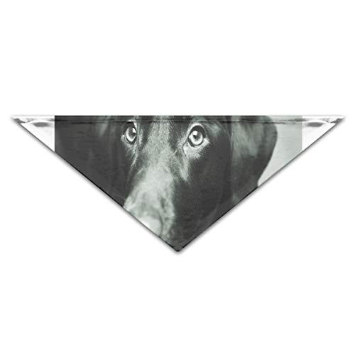 HJudge Dog Bandana Black Lab Canine Dog Dog Scarf Custom Personalized Cat Accessories