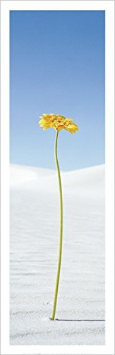 BEYONDTHEWALL Archive Yellow Daisy Flowers Floral Photography Decorative Print (Unframed 12x36 Poster)
