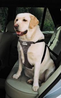 Ancol perro coche Arnés de seguridad, negro, tamaño extra grande ...