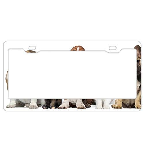 Elvira Jasper Animal Cat Dog Basset Hound Bulldog French License Plate Frame (Alumina)