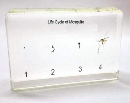 ciiizaoo Life Cycle of Mosquito specimen paperweight in Resin In Clear Lucite Block