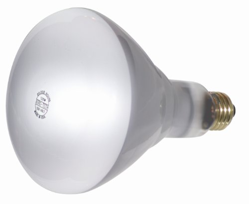 Br 25 Flood Light Bulbs in Florida - 2