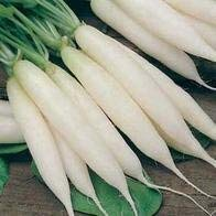 160 seeds Seekay Radis Longue Blanc Icicle Environ 160 Graines Mooli