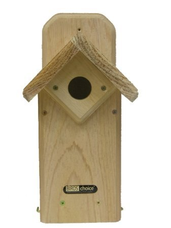 Birds Choice Eastern Winged Bluebird House Review