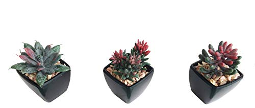 3-Pack Artificial Fake Mini Green Succulent Cactus Plant in Black Square Planter Pot w/Sand Gravel for Terrarium Zen Garden Gift Set