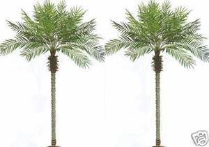 Two 8 Foot Artificial Phoenix Palm Trees -