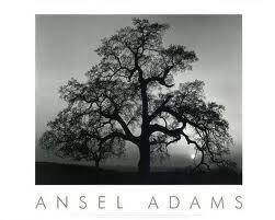 POSTERHOUND Oak Tree, Sunset City, California 34×28 Framed Art Print by Adams, Ansel