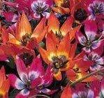 (3) Flowering Bulbs