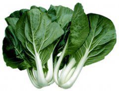 Cabbage PAK Choi White Stem Great Heirloom Vegetable 400 Seeds