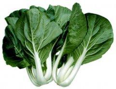 Cabbage PAK Choi White Stem Great Heirloom Vegetable 400 - Bok Choy Green