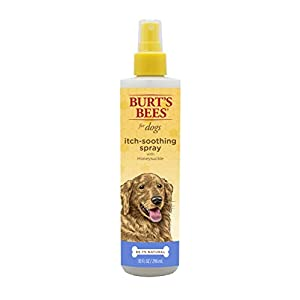 Burt's Bees For Dogs Natural Itch Soothing Spray with Honeysuckle | Dog and Puppy Anti-Itch Spray, 10 Ounces 50