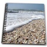 3dRose db_89073_1 Seashells, Sanibel Island, Gulf Coast, Florida-Us10 Dfr0166-David R. Frazier-Drawing Book, 8 by 8-Inch