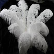 Ostrich Deluxe Formal Snow White- Feather Plume 20-28