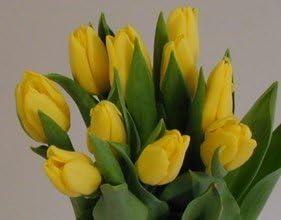 Ramo 20 Tulipanes Naturales Amarillos