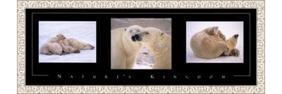 Poster Palooza Framed Nature's Kingdom-Polar Bears- 36x12 Inches - Art Print (White Wash Frame)