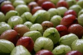 Pack of 1, Scent Special - 25 Lb. Gooseberry, Not for Use In Candle Gel
