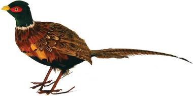 Inspired By Nature 30'' Artificial Feathered Male Pheasant - Life Size Realistic Bird for Fall and Autumn Decorating
