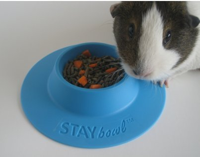 STAYbowl-Tip-Proof-Ergonomic-Pet-Bowl-for-Guinea-Pig-and-Other-Small-Pets-14-Cup-Size-Sky-Blue