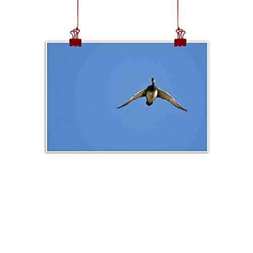 duommhome Wall Art Decor Poster Painting American Wigeon Flying in a Blue Sky Modern Minimalist Atmosphere 47