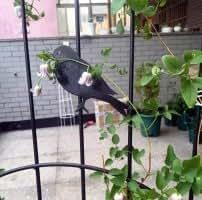 """ecotrellis Metal enrejado jardín enrejado planta apoyo 47.2""""hx15.7W"""