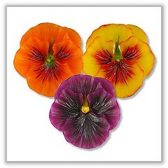 Pansy Flower Floating Candles - Primary - 2¼