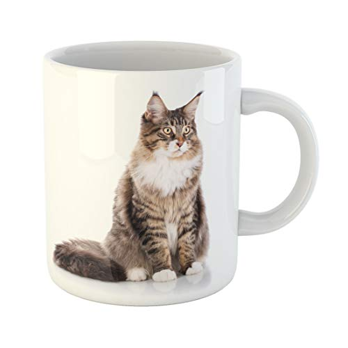 (Emvency Funny Coffee Mug Adorable Portrait of Maine Coon Cat 6 Months Old Sitting in Front White Animal 11 Oz Ceramic Coffee Mug Tea Cup Best Gift Or Souvenir)