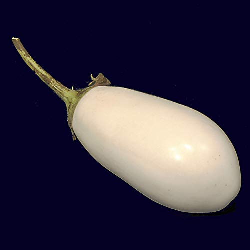 (Casavidas Seeds Package: 25 Seeds - White Aubergine