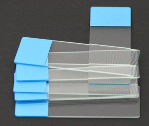 Microscope Slides :: Microscope Colored End Label Microbiology Slides Blue pk of 72 from Scientific Equipment Of Houston
