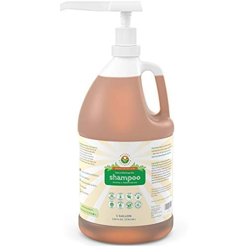 (Organic Soapberry Shampoo (1 Gallon w/Pump) - Cruelty Free Vegan Shampoo With Raw And Wild Plants for Sensitive, Itchy And Dry Scalp - Probiotics Shampoo For Eczema, Psoriasis And Dandruff)