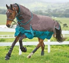 Saxon 600D Standard Neck Medium Turnout Blanket, Chocolate Mint, Size 81 (Neck Medium Turnout Blanket)