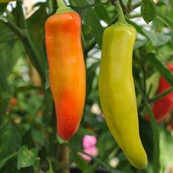 (30+ Organic Hungarian Yellow Hot Wax Pepper Seeds)