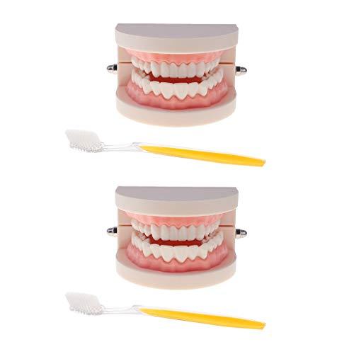 [해외]DYNWAVE 2 세트 인간의 치아 모델 칫 솔 세트 1:1 의치 모델 치아 교육 Typodont 해부학 장난감 실험실 사무실 장식 / DYNWAVE 2 Sets Human Teeth Model with Toothbrush Set 1:1 Denture Model for Teeth Teaching Typodont Anatomy Toy Lab Offic...