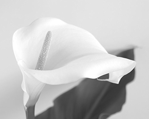 black-and-white-calla-lily-photograph-modern-home-decor