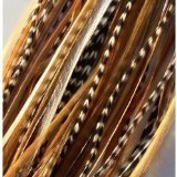 "8"" -12"" in Length Beautiful Natural Beige & Brown Feathers for Hair Extension with Mixes of Browns & Beiges Feathers with Salon Quality 7 Feathers"