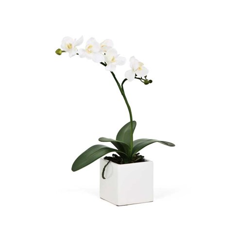 - Torre & Tagus 1684-100000 16-Inch Orchid Potted Single Stem, White