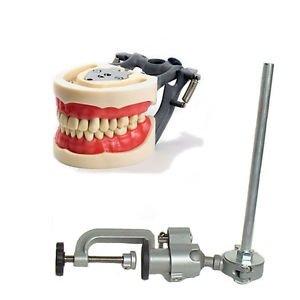 Dental Typodont, Dentoform Mounting Pole for Anatomy Models