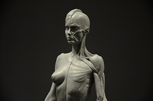 Female Anatomy Figure: 10 5-inch Anatomical Reference for Artists (Grey)