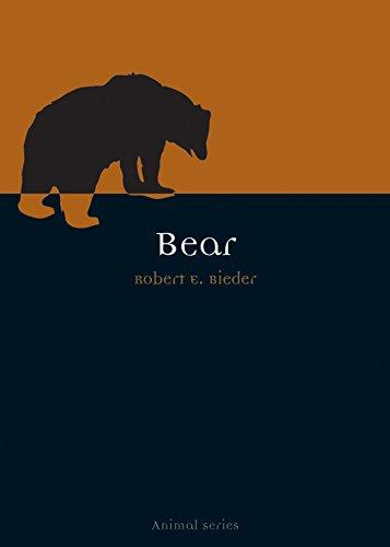 Great White Bear - Bear (Animal)