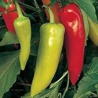 300 HUNGARIAN HOT WAX PEPPER (Hot Banana Pepper) Capsicum Annuum Vegetable Seeds