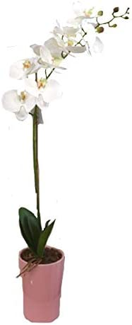 Amazon Com Mina Flower Design Single Long Stem Orchid Arrangement