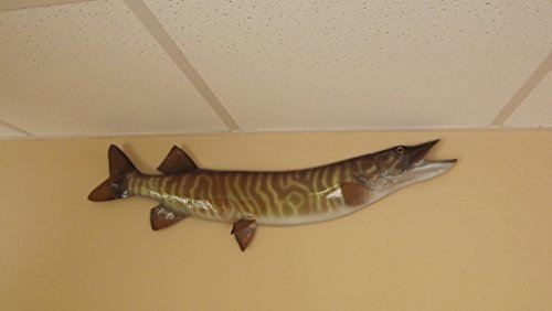 36'' Tiger Musky Half Mount Fish Replica - Low Price Guarantee - Perfect Coastal Themed Wall Decor by Mount This Fish Company (Image #2)
