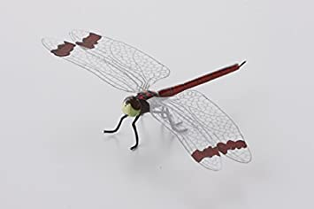Amazon | 【かごや】昆虫模型 み...