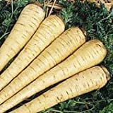 All American Parsnip 300 + Seeds Earlier and taller topped than Hollow Crown
