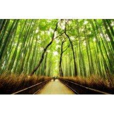 Bamboo Fresh Garden - 2693 - Premium Fragrance Oil - 2 Oz (60 ml) - BUY 2 and GET 20% OFF