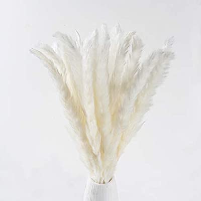 Xyxcmor Dried Pampas Grass Plumes 25pcs 17 Inch Tall Natural Dried Flowers Arrangements For Wedding Door Vase Wreath Decor Artificial Faux Reed Flower Stems Bunch White Amazon Sg Home