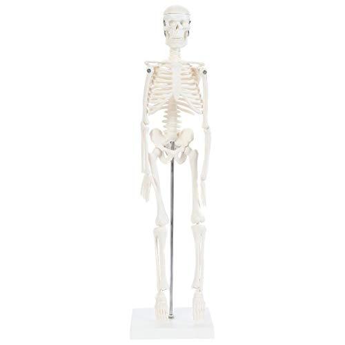 (Anatomy Lab Micro Human Skeleton Model   Mini Skeleton Has Movable Arms and Legs   Desktop Plastic Skeleton Measures 19 Inches Tall   Design Shows Basic Details of Human Skeleton)